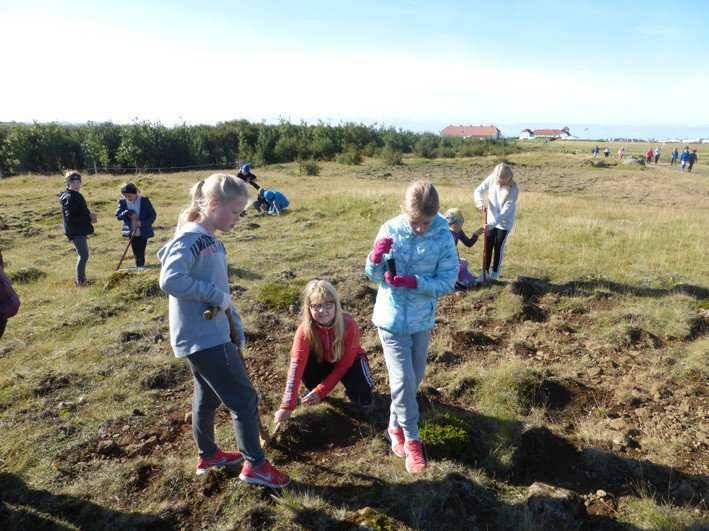 School children planting trees in an eroded area close to the residence of the President of Iceland, Bessastaðir (far right). Photo: Hofsstaðaskóli Primary School