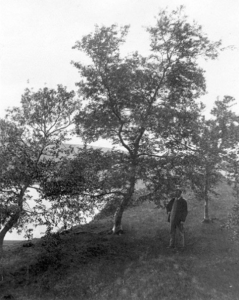 A photo taken around 1910 at one of the sites, which at that time had recently become Iceland´s first National Forests. It probably shows the tallest tree in Iceland at the time. Photo: Skógræktin/CE Flensborg